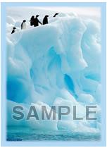 ブロッコリー ハイブリッドスリーブ 第13弾「凍てつく世界の温もり」