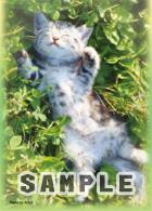 キャラクタースリーブコレクション 第30弾 猫「アメリカンショートヘアー」