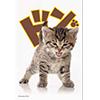 ブロッコリーキャラクタースリーブ 「子猫」