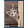 ブロッコリーキャラクタースリーブ 猫「チラッ」
