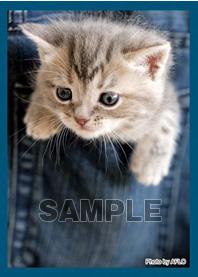 キャラクタースリーブコレクション 第82弾 ブロッコリー ハイブリッドスリーブ 「ポケットの子猫」
